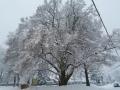 Zimna-priroda